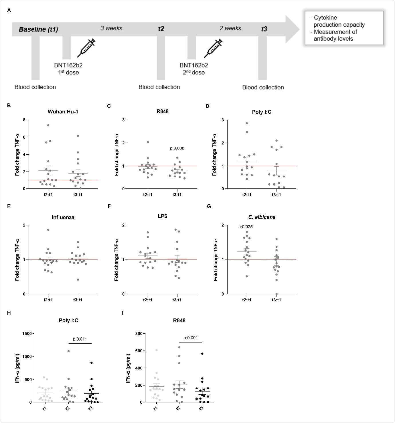 TNF-&agr;- und IFN-&agr;-Produktion als Reaktion auf heterologe Stimuli in PBMCs, die von geimpften Personen isoliert wurden.  (A) Beschreibung der Studie: Impf- und Blutentnahmetage.  (BG) Faltungsänderungswerte der TNF-α-Produktion werden individuell für jedes Subjekt durch Division von t2:t1 und t3:t1 berechnet.  Die Daten werden als Faltungsänderungen ± SEM (n = 15-16) dargestellt und durch Wilcoxons Matched-Pairs-Vorzeichen-Rang-Test analysiert, der jedes Verhältnis mit vergleicht