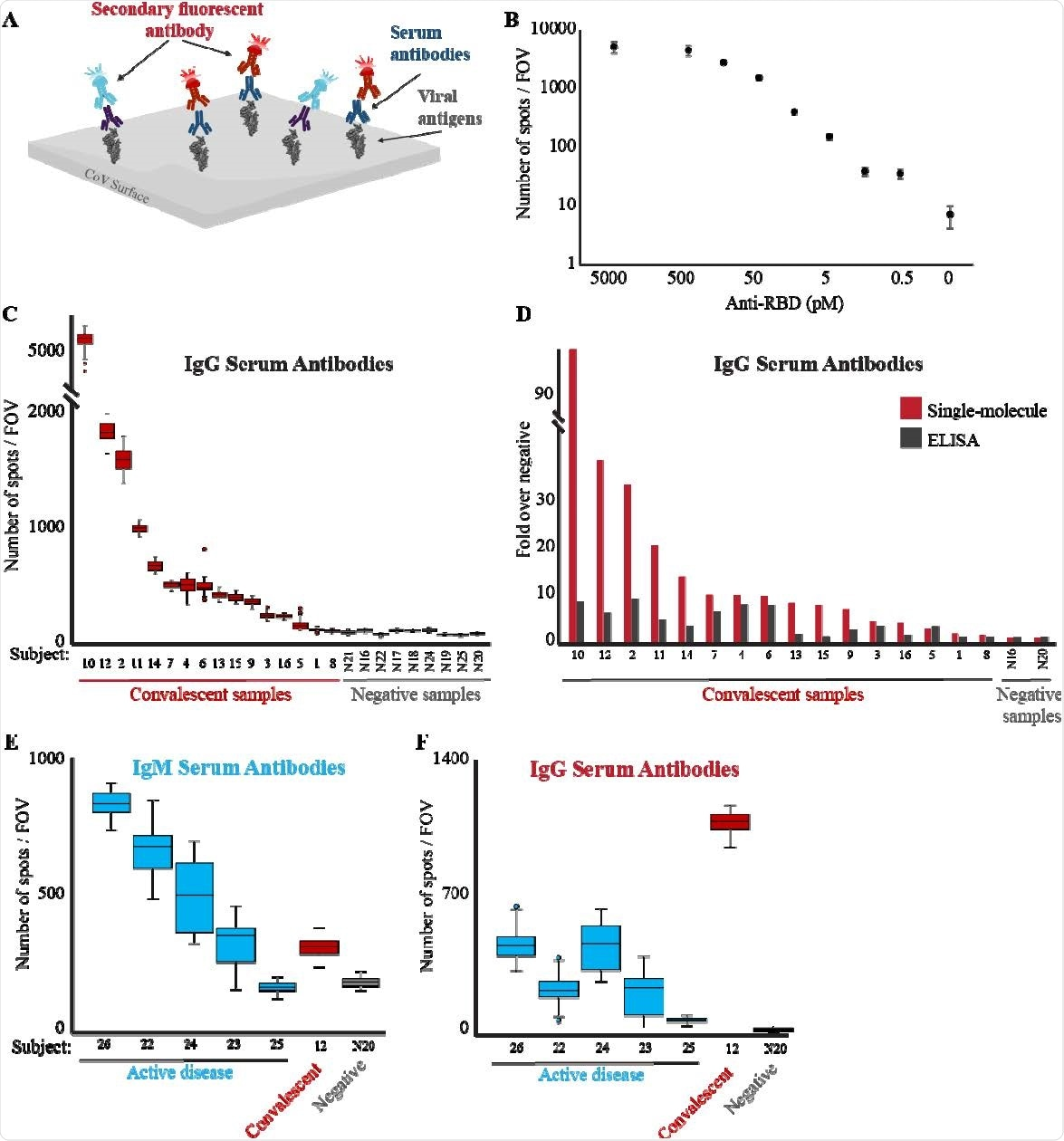 Detección de molécula única de anticuerpos anti-RBD.  (A) Esquema de la prueba de diagnóstico serológico.  Las muestras de suero se incuban con antígeno viral conjugado con biotina (RBD) y se cargan en un cubreobjetos activado con estreptavidina recubierto con PEG.  Se añaden a la celda de flujo y se obtienen imágenes de varios anticuerpos anti-IgG humana (rojo) e IgM (azul claro) marcados con fluorescencia.  (B) Los anticuerpos anti-RBD humanos a las concentraciones indicadas se incubaron con biotina-RBD y se detectaron mediante anticuerpos IgG anti-humanos marcados con fluorescencia.  El LoD de anticuerpos se encuentra en concentraciones picomolares.  Ambos ejes están en escala logarítmica y el punto de datos sin anticuerpos anti-RBD no está a escala.  (C) Las muestras de suero de sujetos convalecientes o no infectados se diluyeron 1: 2500 y se analizaron como se describe en B para detectar la presencia de anticuerpos IgG anti-RBD en el suero de los sujetos.  El diagrama de caja muestra el número de puntos por campo de visión para todos los campos de visión fotografiados para cada muestra.  Los valores medios de cada grupo se compararon mediante la prueba t, valor p <0,05.  (D) Comparación entre la detección de una sola molécula y ELISA de anticuerpos anti-RBD.  Se realizaron imágenes de una sola molécula y ELISA contra anticuerpos anti-RBD en las mismas muestras.  Las señales de cada ensayo se normalizaron en comparación con las muestras de suero negativas.  La formación de imágenes de una sola molécula proporciona una mayor sensibilidad y rango dinámico en la detección de anticuerpos anti-RBD en suero.  (EF) El suero de sujetos con una enfermedad COVID-19 activa (azul), sujetos convalecientes (rojo) o no infectados (gris), se diluyó 1: 2500, se incubó con biotina-RBD y se cargó en una superficie recubierta de estreptavidrio.  Se obtuvieron imágenes y se cuantificaron anticuerpos anti-IgM (E) o IgG (F) humanos marcados con fluorescencia.