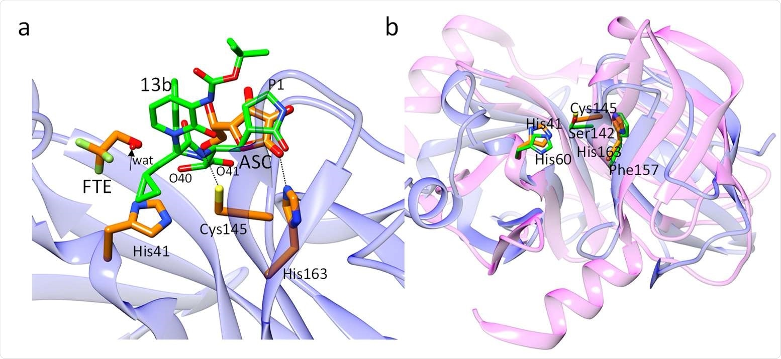 Structural comparisons. (a) Comparison of ligands in the active site of CoV-2 3CLpro. The position of the L-ascorbate molecule relative to compound 13b in 3CLpro as determined by Zhang et al., 2020. The positions of the C2'-oxygens is close to the two compound 13b oxygens O40 and O41 (marked), and the dihydroxyfuranone-ring of ASC coincides with the P1 moiety of compound 13b. The arrow points to a water molecule found in the structure of 3CLpro complexed with compound 13b. This position is occupied by the FTE oxygen. (b) Overlay of the N-terminal domain of CoV-2 3CLpro (blue ribbon, from residues 8 to 181) on the Hepatitis-C virus (HCV) serine protease (magenta ribbon). Active site residues are shown (orange for the 3CLpro, and green for the HCV protease). The active sites of both proteins are very similar. The positions of the catalytically active Cys145/Ser142 and His41/His60 are essentially identical. His163 in CoV-2 3CLpro is replaced by the structurally similar Phe157 in the HCV protease.