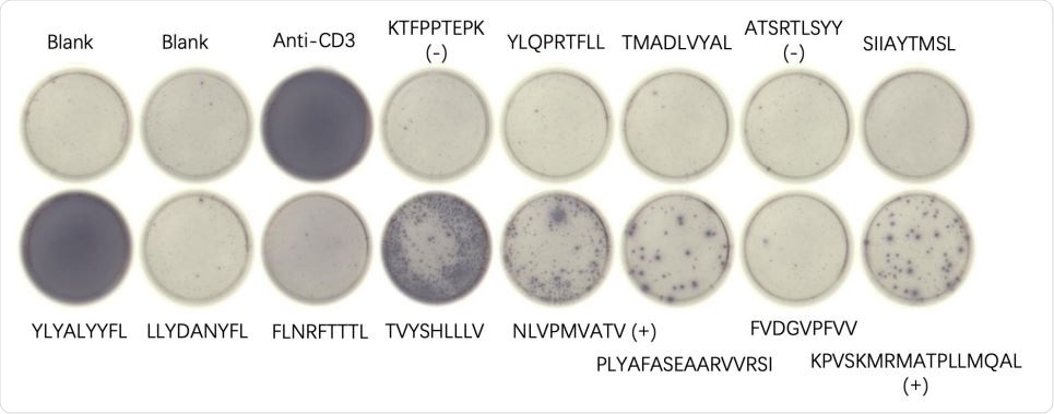 Mouse 3-2 ELISpot results for indicated peptides resulting from an mRNA-LNP vaccine using the ALC-0315 formulation. Blanks contained no added peptides, and positive controls (+) and negative controls (-) are indicated. Anti-CD3 antibody was added as a positive control to the indicated well.