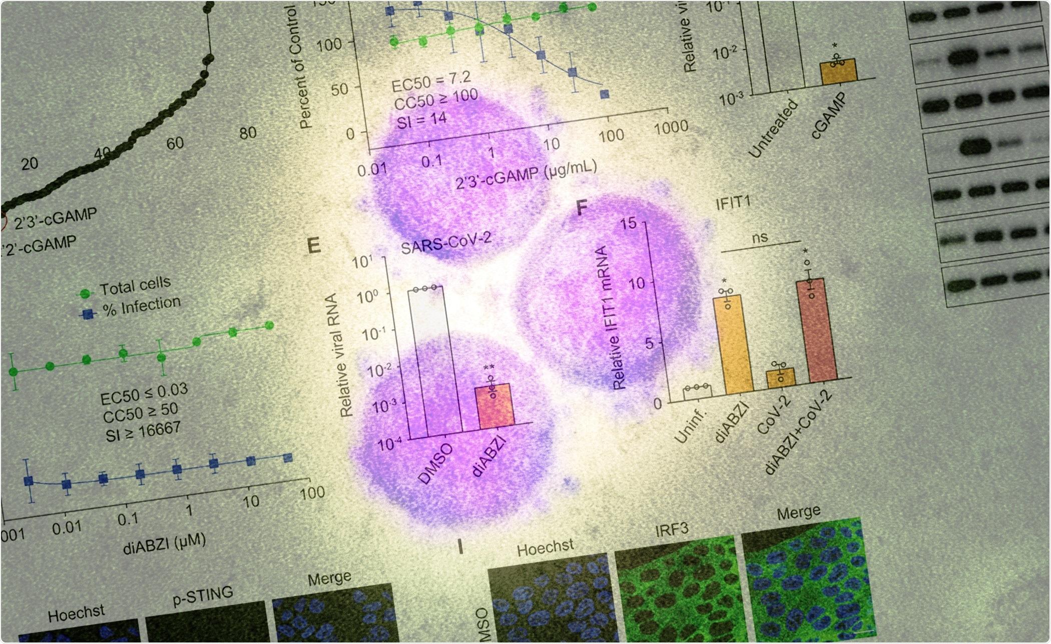 Estudio: La activación farmacológica de STING bloquea la infección por SARS-CoV-2.  Crédito de la imagen: Science Immunology y NIAID
