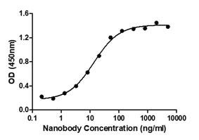 Binding ability measured in a functional ELISA. Anti-2019-nCoV Spike Protein Neutralizing Nanobody (C19S1-653L) binds 2019-nCoV Spike protein RBD (C19SD-G241H).