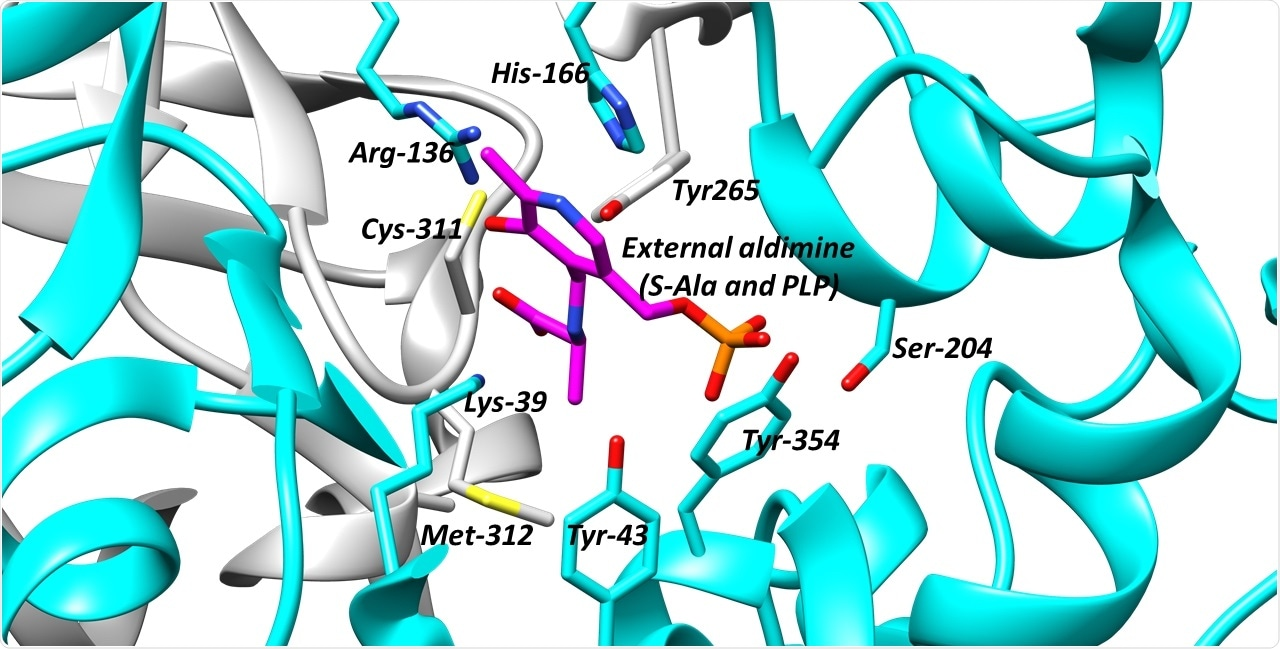 Scientists propose new strategies to find drugs that neutralize critical enzymes