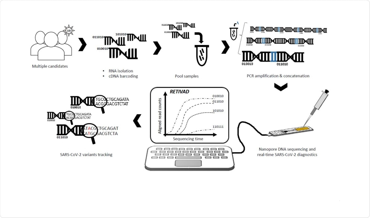 Scheme illustrating the proposed real-time SARS-CoV-2 diagnostics and variants tracking strategy. RNA samples isolated from multiple candidates are converted into complementary DNA (cDNA) such that samples associated to each candidate are labelled by molecular DNA barcodes appended to their extremities. Barcoded-cDNA samples are pooled together and PCR amplified in presence of a bridge sequence (blue) allowing to generate concatemers. Long DNA concatemers are loaded into the MinION nanopore sequencer for real-time SARS-CoV-2 diagnostics and variants tracking with the help of RETIVAD.