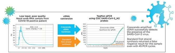 Crescendo cdna™合成QPCR