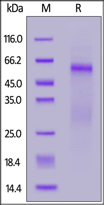 N Protein Variants and Their Importance in Antibody Test and Design