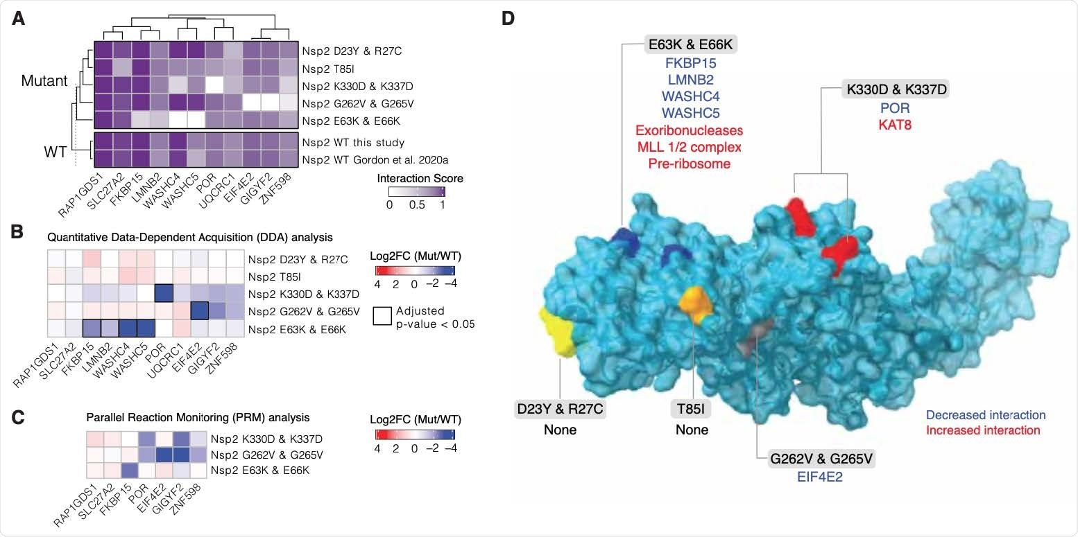 """Nsp2 possesses multiple interaction surfaces for host proteins. (A) Interaction scores (average between MiST and Saint Scores) for human proteins (""""preys"""") deemed high-confidence interactions in at least one affinity purification (""""bait"""") mass spectrometry assay and detected to interact with both the wild-type Nsp2 in this study and in Gordon et al (2020a). Interaction scores range from zero to one, one being the most high-confidence. (B) Quantitative statistical analysis of data-dependent acquisition (DDA) mass spectrometry data using MSstats for interactions selected and depicted in A. Prey intensities were normalized by bait expression abundance. Log2 fold changes and BH-adjusted p-values were calculated by comparing each mutant to the wild-type from this study. Square black outlines depict adjusted p-values < 0.05. (C) Parallel reaction monitoring (PRM) analysis of select preys from B for mutants found to possess significantly-changed interactions (adjusted p-value < 0.05). (D) Nsp2 structure depicted as surface (light blue) with the mutations considered in this study depicted on the surface: E63K/E66K (dark blue), K330D/K337D (red), D23Y/R27C (yellow), T85I (orange), and G262V/G265V (grey). Lost interactions (adjusted p-value < 0.05) from data-dependent acquisition global proteomics analysis (DDA) from B depicted in blue and gained protein complexes depicted in red"""