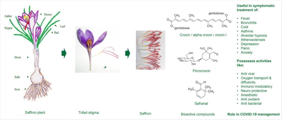 Composés bioactifs de stigmate de safran avec la valeur thérapeutique utile pour le management COVID-19.