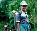 Study identifies discrepancies in WHO classifications of pesticide hazards