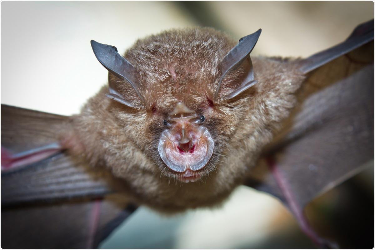 Study: Identification of a novel lineage bat SARS-related coronaviruses that use bat ACE2 receptor. Image Credit: Binturong-tonoscarpe / Shutterstock