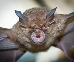 Discovery of novel SARS-related coronaviruses in bats