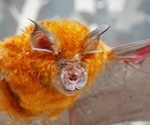 How SARS-CoV-2 evolved from a bat-to a human-adapted virus