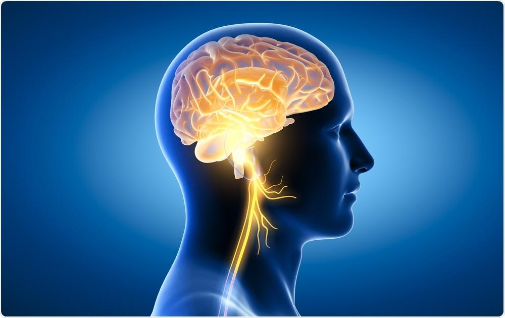 Estudio: Estimulación del nervio vago: una terapia complementaria potencial para COVID-19.  Haber de imagen: Axel_Kock / Shutterstock