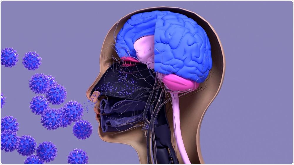 Système nasal