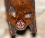 Two new SARS-like coronaviruses described in Russian horseshoe bats