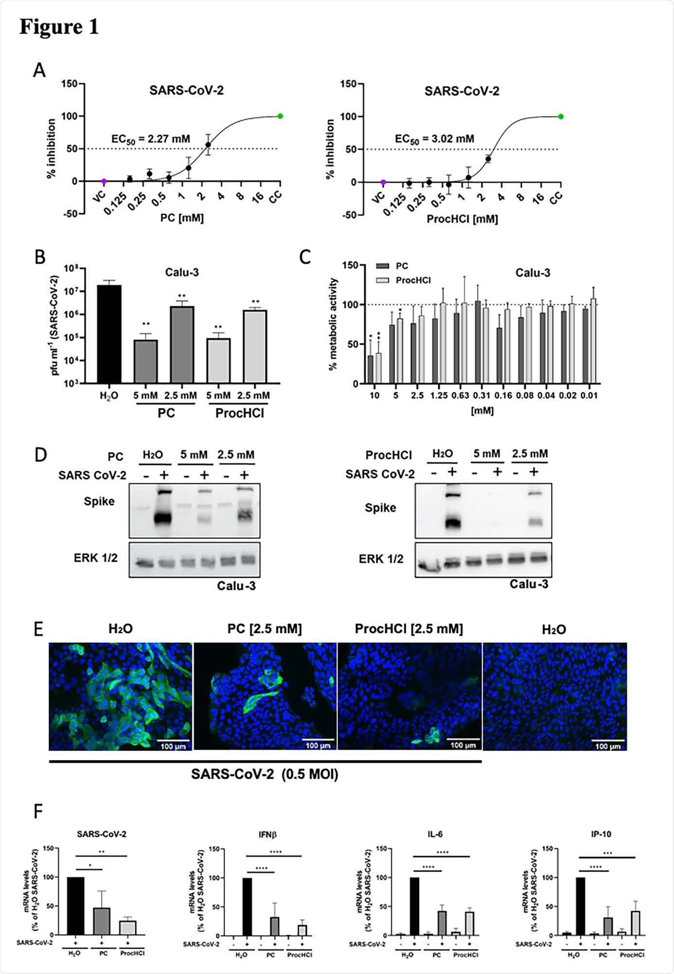 ProcCluster® and Procaine-hydrochloride inhibit SARS-CoV-124 2 infection in vitro. Vero-76 cells (A) or Calu-3 cells (B-F) were infected with SARS-CoV-2 (A-B, D-F) or left uninfected (C) in absence and presence of the indicated substances (A-F). (A) The relative amount of surviving cells was measured to determine the effective concentrations 50 % (EC50) of PC and ProcHCl. (B) Virus titres were examined by standard plaque assays. (C) Proliferation of Calu-3 cells was analysed by MTT assay. (D) Protein synthesis of SARS-CoV-2 spike protein was visualized by western-blotting and equal protein load was verified by detection of the housekeeping protein ERK 1/2. (E) Immunofluorescence microscopy shows SARS-CoV-2 spike protein expression (green) and the nuclei were stained with Hoechst-33342 (blue). (F) The mRNA synthesis of SARS-CoV-2 (N1), cellular IFN-b, IL-6 and IP-10 were quantified by qRT-PCR. Data represent the mean + SD of three (A, B, F) or four (C) independent experiments, including two technical samples (*p < 0.05; **p < 0.01; *** p < 0.001; **** p < 0.0001).