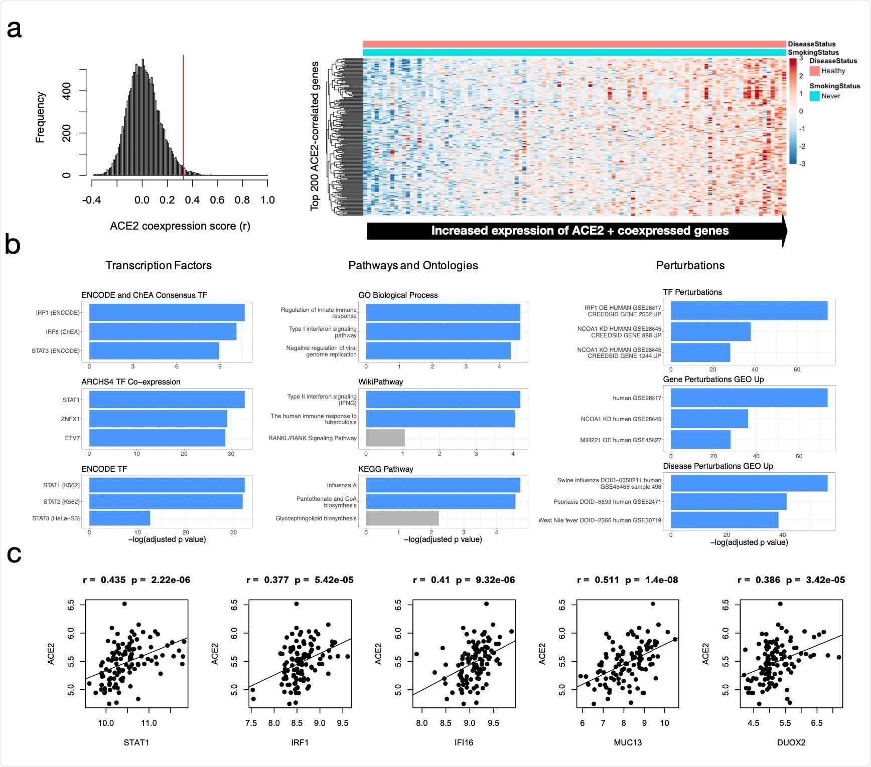 Expresión y análisis funcional del enriquecimiento de ACE2 y de genes coexpressed. a) Expresión de los genes de la capota 200 ACE2-correlated (ACE2 incluyendo) en sano, no fumadores (N=109). b) Análisis funcional del enriquecimiento de los genes de la capota 200 ACE2correlated (ACE2 incluyendo). Los términos son alineados por log2 (valor de FDRadjusted p) para nueve ontologías/grupos de interés. c) Correlación de Pearson de ACE2 con los genes interferón-relacionados importantes del candidato encontrados para coexpressed con ACE2.