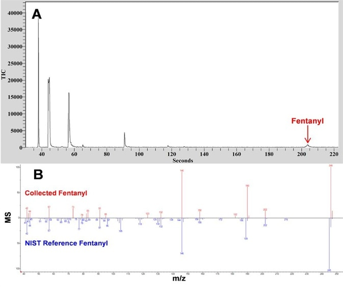 CME-GC/MS analysis of glassware used to synthesize fentanyl diluted in acetonitrile. (A) TIC of fentanyl and additional products from the fentanyl synthesis. (B) MS comparison between fentanyl collected with Torion T-9 (Blue) and NIST reference spectra (Red).