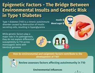 Study shows how epigenetic factors modulate the risk of type 1 diabetes