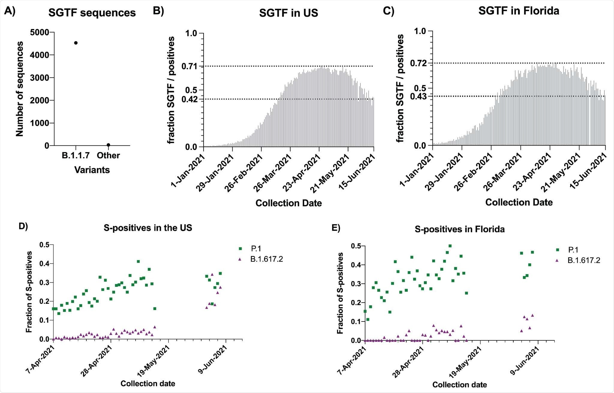 B.1.1.7 is being replaced by B.1.617.2 and P.1 in the United States. A) Counts of S-Gene Target Failure (SGTF) sequenced in May and June 2021 that were B.1.1.7 or Other variants. B) Fraction of SGTF to total positives per day in the US. The two dotted lines correspond to the maximum level observed in the US (71%) and the current level (42%). C) Fraction of SGTF to total positives per day in Florida. The two dotted lines correspond to the maximum level observed in Florida (72%) and the current level (43%). D) Fraction of S-positives sequenced that were either B.1.617.2 (purple triangles) or P.1 (green squares) by day in the US. No sequences were available from May 14 to June 2 2021. E) Fraction of S-positives sequenced that were either B.1.617.2 (purple triangles) or P.1 (green squares) by day in the US.