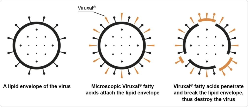 A proposed antiviral mechanism of fatty acids in Viruxal against enveloped viruses.
