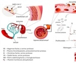 New insights can pave the way for targeted therapies to fight blood clots in COVID-19 patients