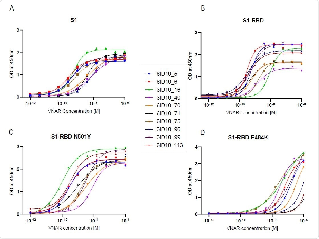 ELISA EC50 binding affinity of select VNAR-hFc antibodiesto Wuhan and mutant spike proteins. ELISA was used to determine EC50 values for individual VNAR-hFc antibodies to (A) S1, (B) S1-RBD, (C) S1- RBD N501Y, and (D) S1-RBD E484K. Microplates were coated with different spike proteins and incubated with serially diluted VNAR-hFc antibodies followed by detection with HRP conjugated anti-human Fc antibody. The developed plates were read at 450nm and OD was used for 4-parametric non-linear regression model to calculate EC50 values.