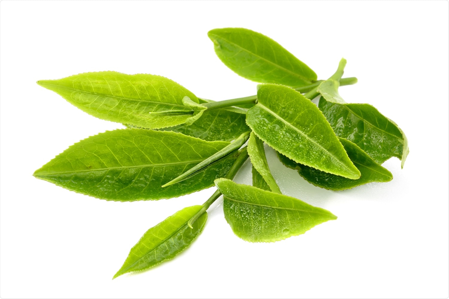 Study: The green tea catechin EGCG provides proof-of-concept for a pan-coronavirus entry inhibitor. Image Credit: Scorpp / Shutterstock