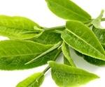 Green tea catechins might be useful as pan-coronavirus inhibitors
