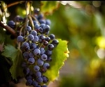 Preventing Wine Adulteration