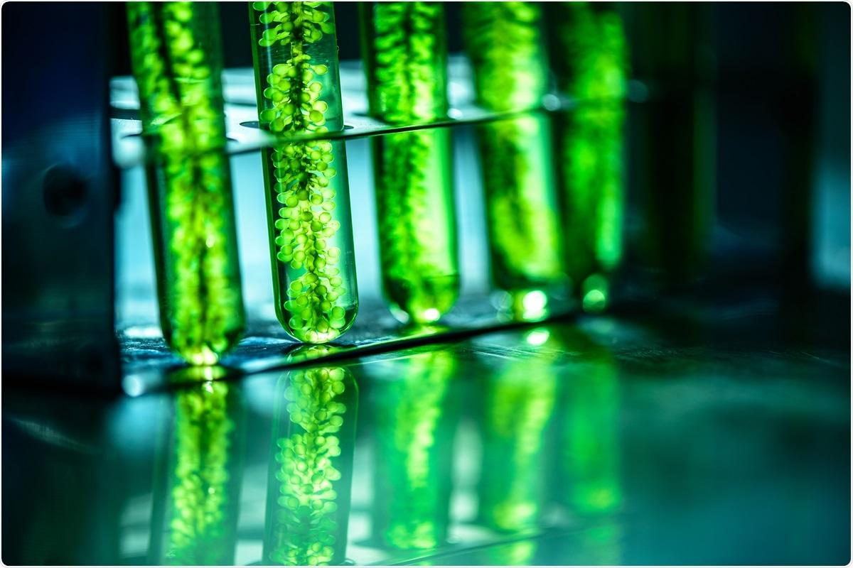 Study: Evaluation of Microalgae Antiviral Activity and Their Bioactive Compounds. Image Credit: Chokniti Khongchum / Shutterstock