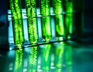 Could microalgae-derived antiviral compounds combat SARS-CoV-2 and other viruses?