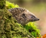 Could the European hedgehog be a sentinel for infectious agents and a harbinger of environmental pollution?