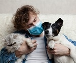 UK study finds SARS-CoV-2 antibodies in domestic cats and dogs