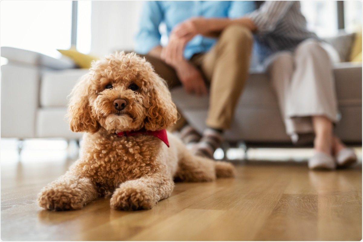 Study: Possible Human-to-Dog Transmission of SARS-CoV-2, Italy, 2020. Image Credit: NDAB Creativity / Shutterstock