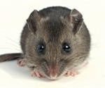 SARS-CoV-2 infection and transmission in the North American deer mouse