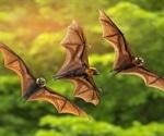 Risk of SARS-CoV-2 spread to bats
