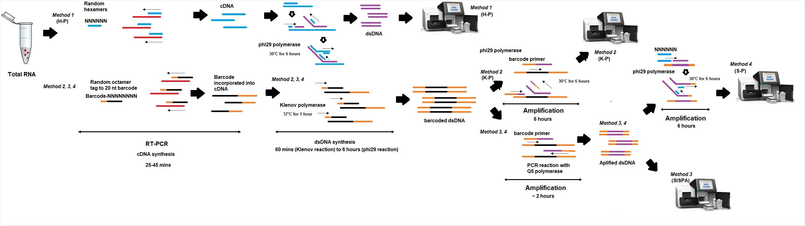Schema of random amplification methods for whole genome assembly of SARS613 Cov-2 virus genome. Method 1 (H-P) is based on the RT-PCR step with random hexamers primer (6Ns) followed by phi29 polymerase isothermal amplification in the presence of 6Ns primer and then library preparation for Illumina sequencing. Method 2 (K-P), random octamer tagged with 20 nucleotide known tag sequence (5`- GACCATCTAGCGACCTCCACNNNNNNNN-3`) (K-8N) was used for RT-PCR step, followed by phi29 polymerase isothermal amplification in the presence of tagged primer K-8N and then library preparation and Illumina sequencing. Method 3, Sequence-Independent, Single620 Primer Amplification (SISPA) technique, followed by library preparation and Illumina sequencing. Method 4 (S-P), following SISPA amplification (Method 3), phi29 polymerase isothermal amplification in the presence of random hexamers (6Ns) was applied and then used for Illumina sequencing