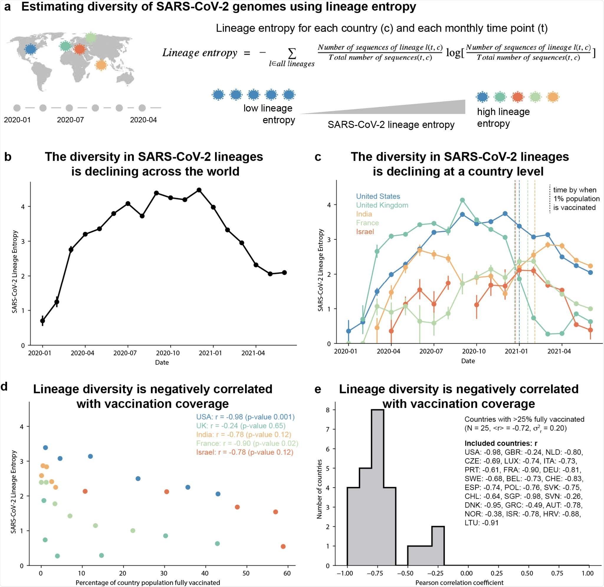 Les génomes SARS-CoV-2 montrent une diversité globale de déclin dans l