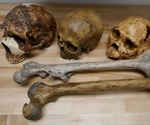 Climate directly contributed to changes in body size and indirectly to brain size throughout human evolution