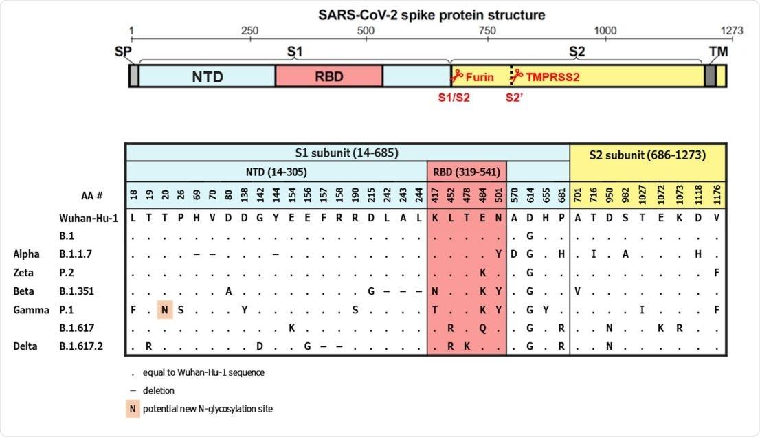 Chiodi la struttura della proteina e l