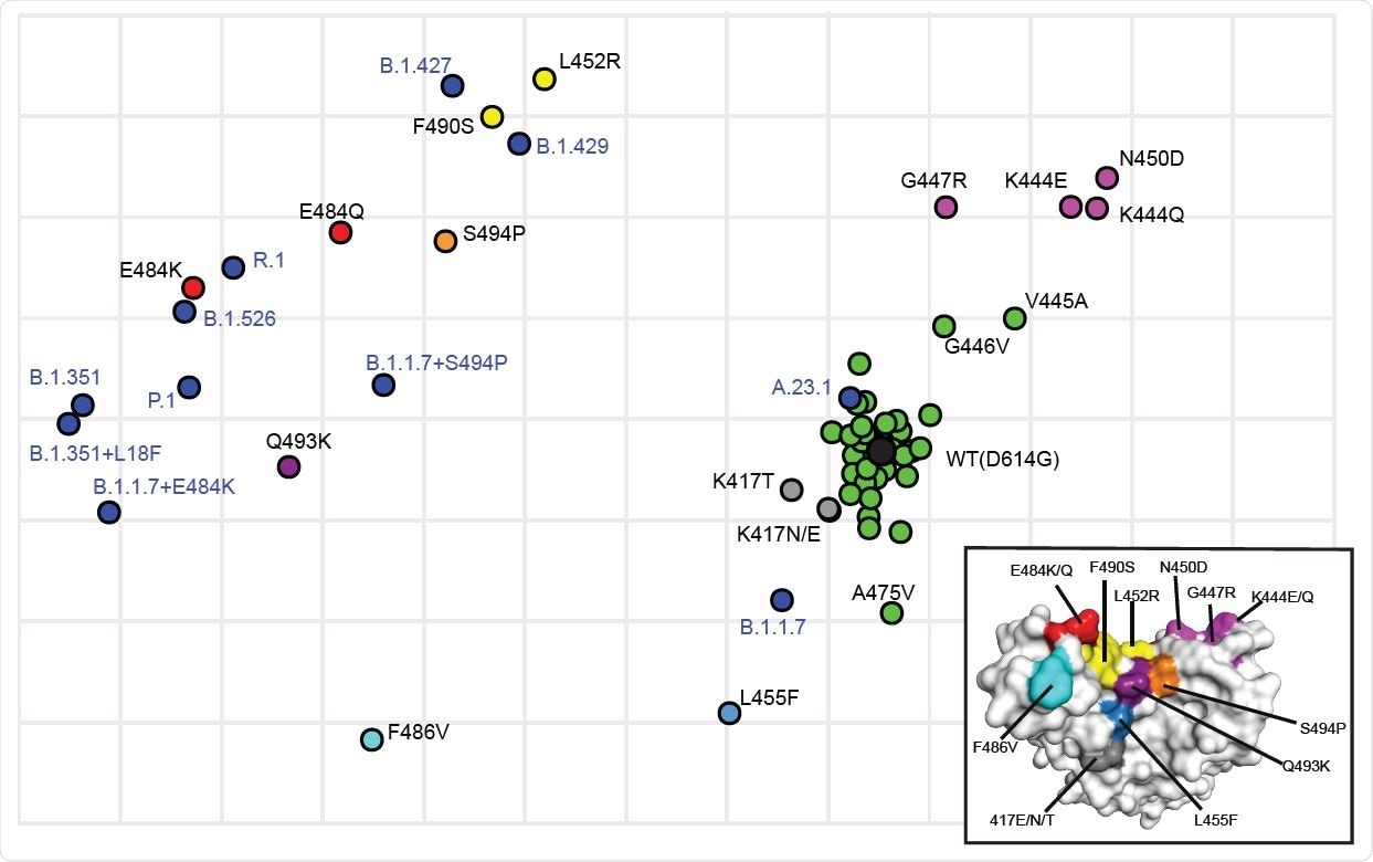 Antigenic cartography showing the relative antigenic distance of pseudoviruses with single substitutions in spike compared to spikes with the full set of substitutions found in variants. Antigenic maps were constructed using neutralization titers (dilution factors) of nAbs against all tested pseudoviruses. Blue dots identify pseudoviruses bearing Spikes representing variants of concern or interest. Black dot identifies the wild type (WT D614G) pseudovirus. Green dots identify pseudoviruses with single substitutions in Spike that are antigenically close to WT. Other colors identify pseudoviruses with single substitutions in Spike that are more antigenically distant from WT. Inset shows the color-coded locations of the single residue substitutions in the RBD.