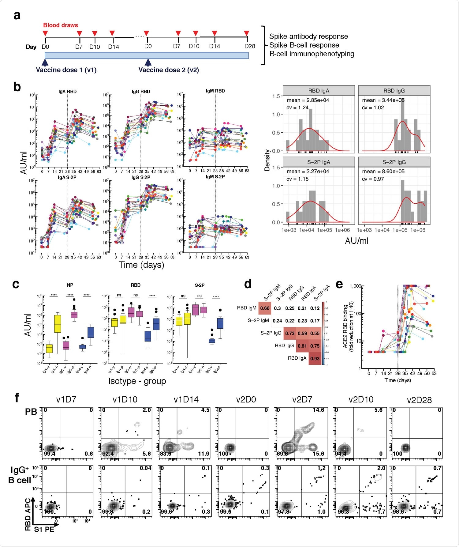 Longitudinal blood sampling and analysis shows robust antibody and early B cell response to mRNA-1273 vaccine. a, Study design with serial blood draws and assays performed at all timepoints on SARS-CoV-2-uninfected vaccinees (n = 21) receiving two doses of the mRNA-1273 vaccine. b, Serum IgG, IgA and IgM binding to S-2P and RBD proteins measured by electrochemiluminescence (ECLIA) longitudinally (left panels), and corresponding histogram and distribution (based on kernel density estimates) at the last timepoint (v2D28) (right panels). c, Peak serum IgG, IgA and IgM binding to S-2P, RBD and N proteins measured by ECLIA in vaccinees (V; n = 21) and COVID503 19 patients (P; n = 21), shown as boxplots. d, Triangular heatmap of correlation between serum antibodies at last measured timepoint (v2D28) in (b). Numbers represent r values. Statistically insignificant correlations (p > 0.05) shown in white. e, Longitudinal inhibition of RBD binding to ACE2 by serum (1:40 dilution) of vaccinees (n = 21). f, Longitudinal binding of S1 and RBD tetramers to PB and IgG+ 507 B cells by flow cytometry shown for a high responder (VAC-611; Extended Data Table 1). Numbers in each quadrant are percentages. Each vaccinee is color509 coded and second vaccine dose indicated by vertical dotted line (b,e). Mann-Whitney test; ****, p < 0.0001 (c). Spearman's rank correlation (d). AU, arbitrary units; D, day; N, nucleocapsid; ns, not significant; P, patients with severe COVID-19; PB, plasmablasts; RBD, receptor binding domain; S1, spike subunit 1; S-2P, stabilized spike trimer; v, vaccine dose; V, vaccinees.