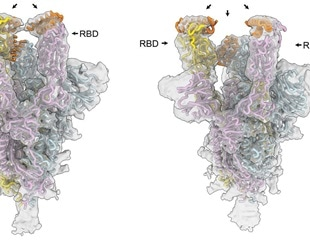 Accelerating the design of minibinder therapeutics resilient to SARS-CoV-2 mutations