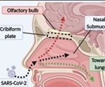 How SARS-CoV-2 infects the brain