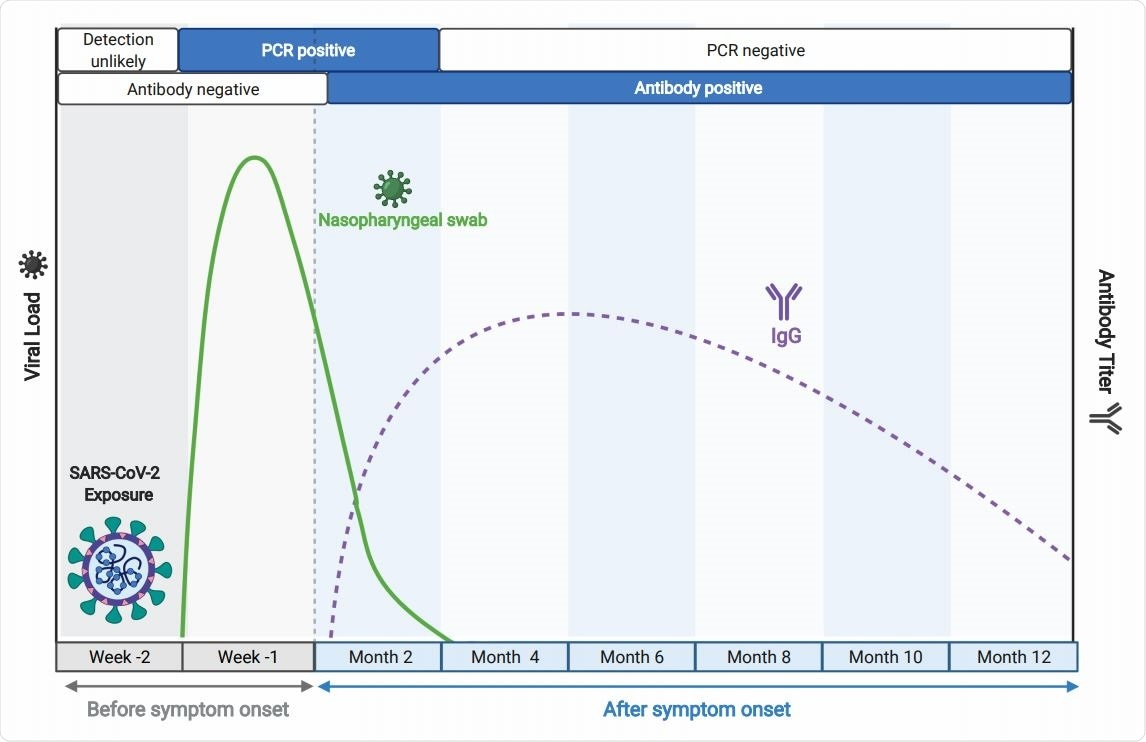 Time course of key biomarkers in SARS-CoV-2 infection, adapted from BioRender.com. The solid green line represents a typical trajectory of the RT-PCR data for viral nucleic acid from respiratory samples, while the broken purple line indicates a typical virus-specific antibody trajectory in peripheral blood, relative to time of infection, as indicated.