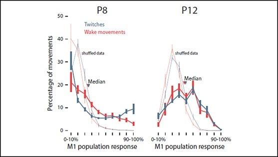 Sleep twitches guide metamorphosis of motor cortex in rats