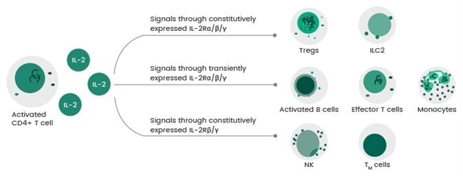IL-2: Recombinant receptor proteins for the cytokine