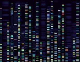 CoVizu: Making visual sense of variation in SARS-CoV-2 genomes