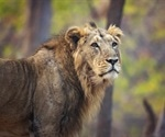 Vaccinate big cats? New report shows SARS-CoV-2 Delta variant infecting endangered lions